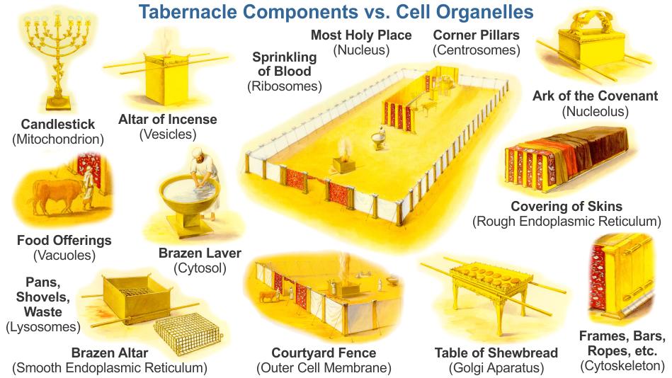Table Of Shewbread